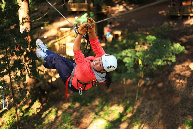 Trees Adventure Lane Poole Park - Treetop  Zipline Experience - Accommodation Coffs Harbour