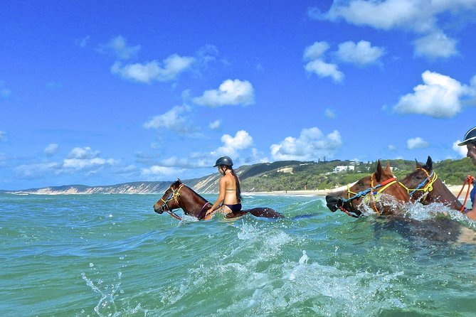 Horse Swimming Ride from Rainbow Beach - Accommodation Coffs Harbour