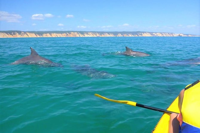 Half-Day Kayak with Dolphins and 4WD Beach Drive from Rainbow Beach - Accommodation Coffs Harbour