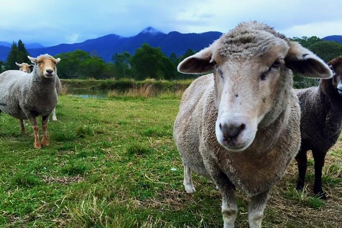 Trevena Glen Farm Animal Experience - Accommodation Coffs Harbour