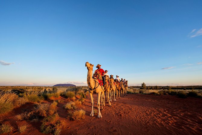 Uluru Camel Express Sunrise or Sunset Tours - Accommodation Coffs Harbour