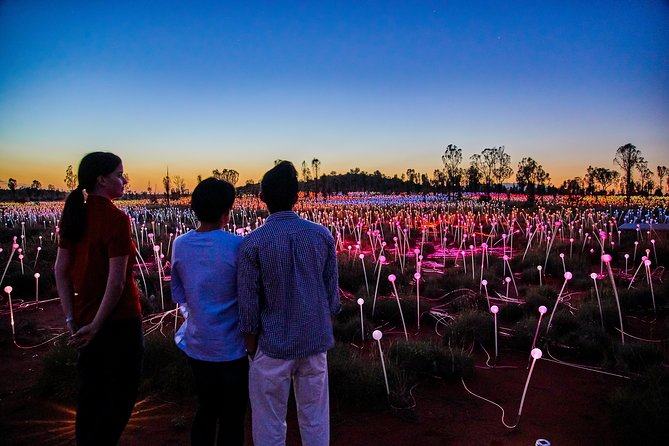 Uluru Field of Light Sunrise Tour - Accommodation Coffs Harbour