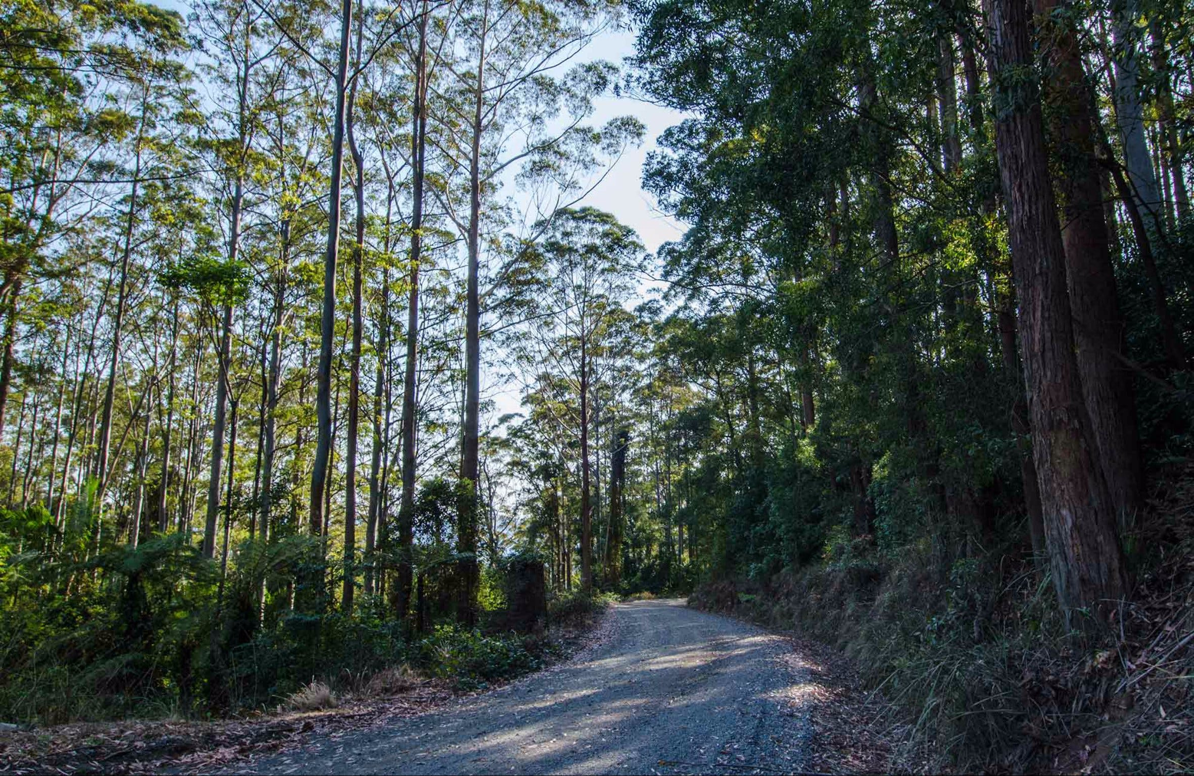 Hastings Forest Way Touring Route - Accommodation Coffs Harbour