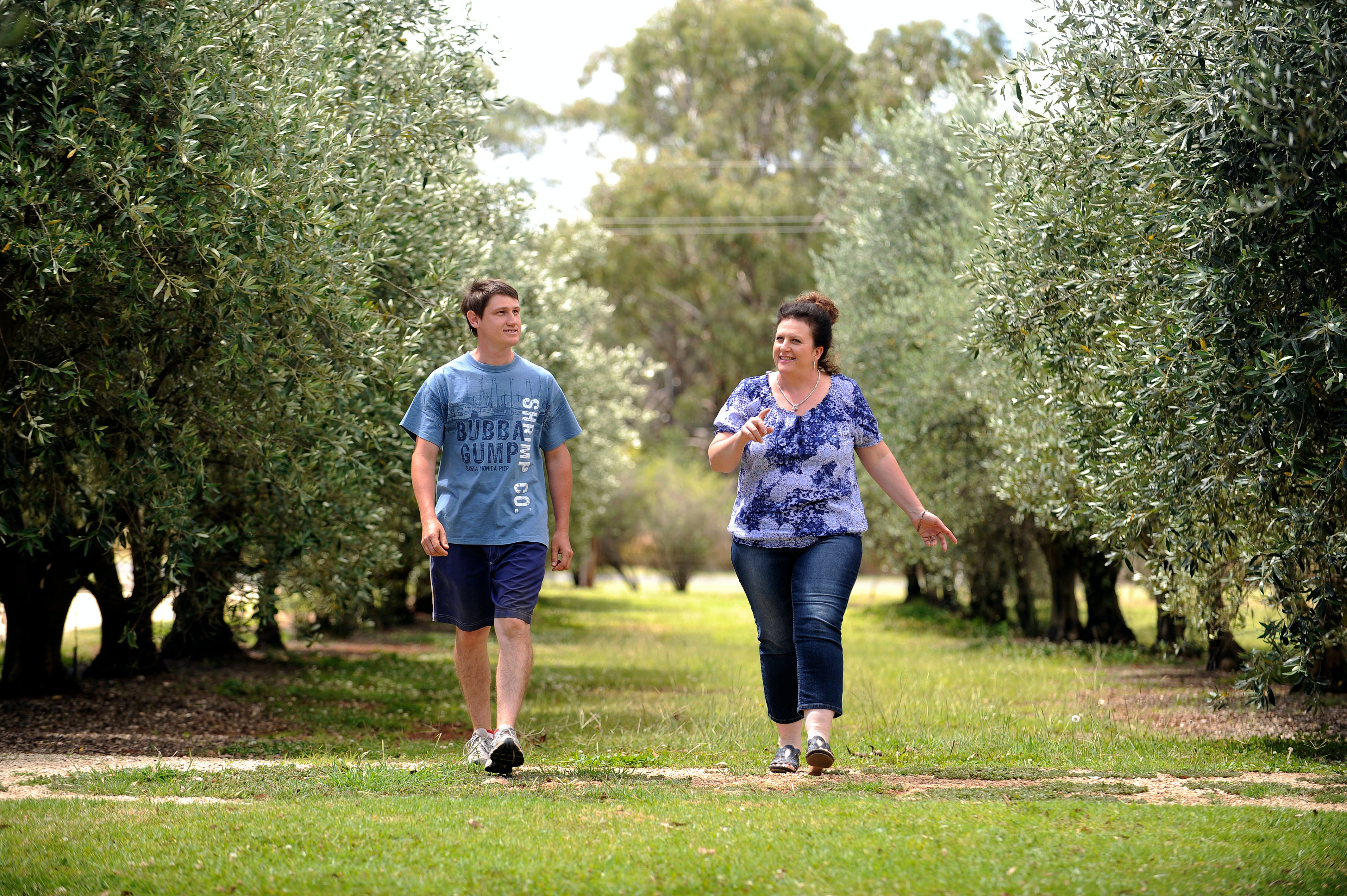 Olives of Beaulieu - Accommodation Coffs Harbour