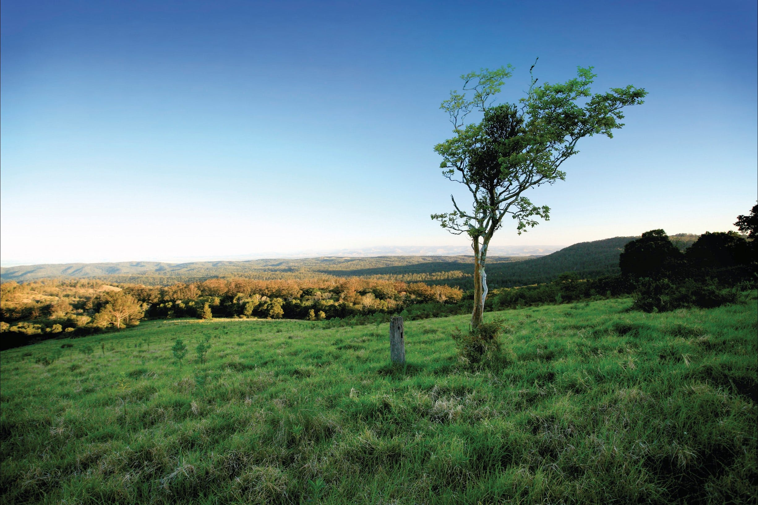 Ravensbourne National Park - Accommodation Coffs Harbour