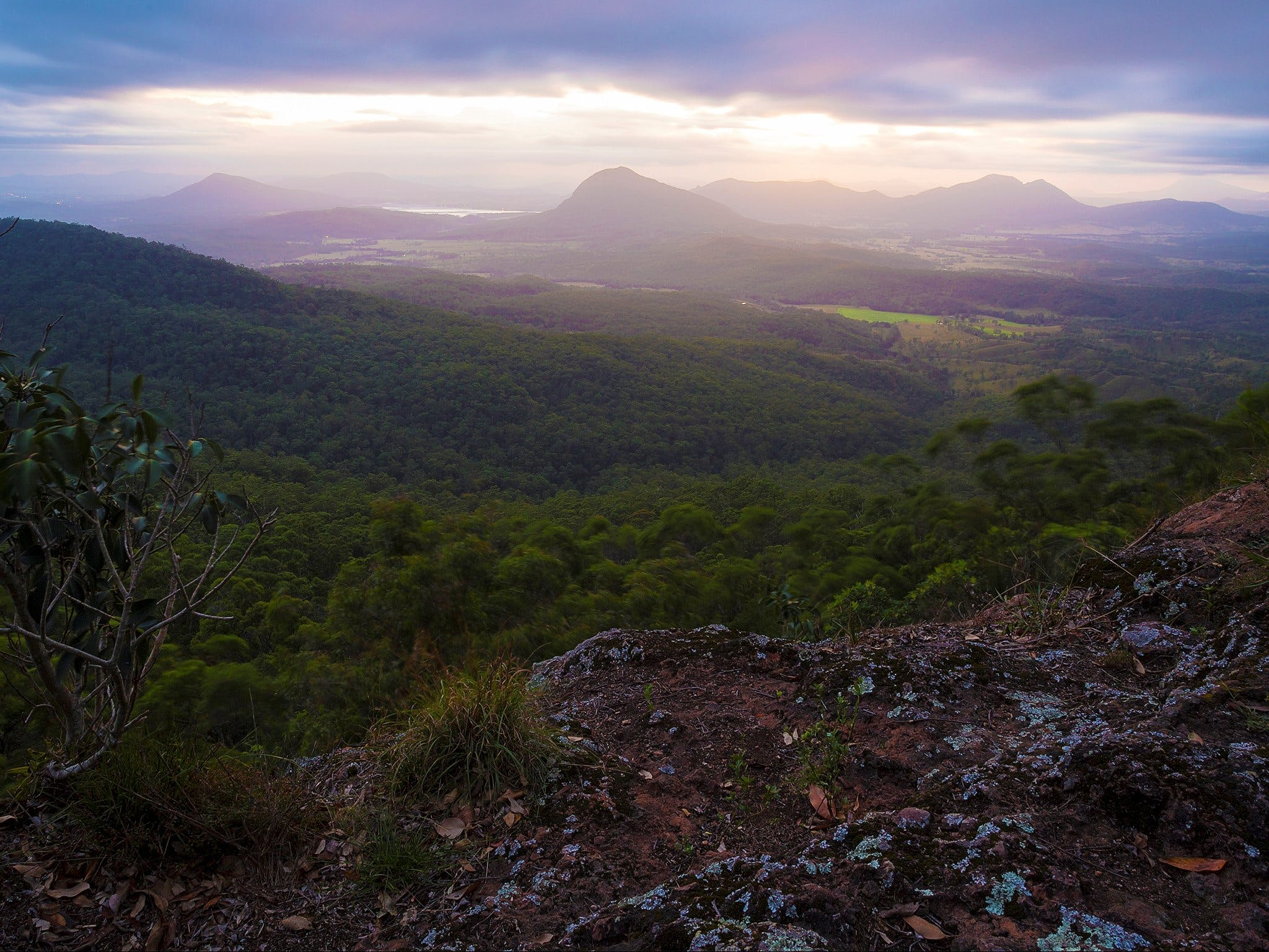 Cunninghams Gap and Spicers Gap Main Range National Park - Accommodation Coffs Harbour