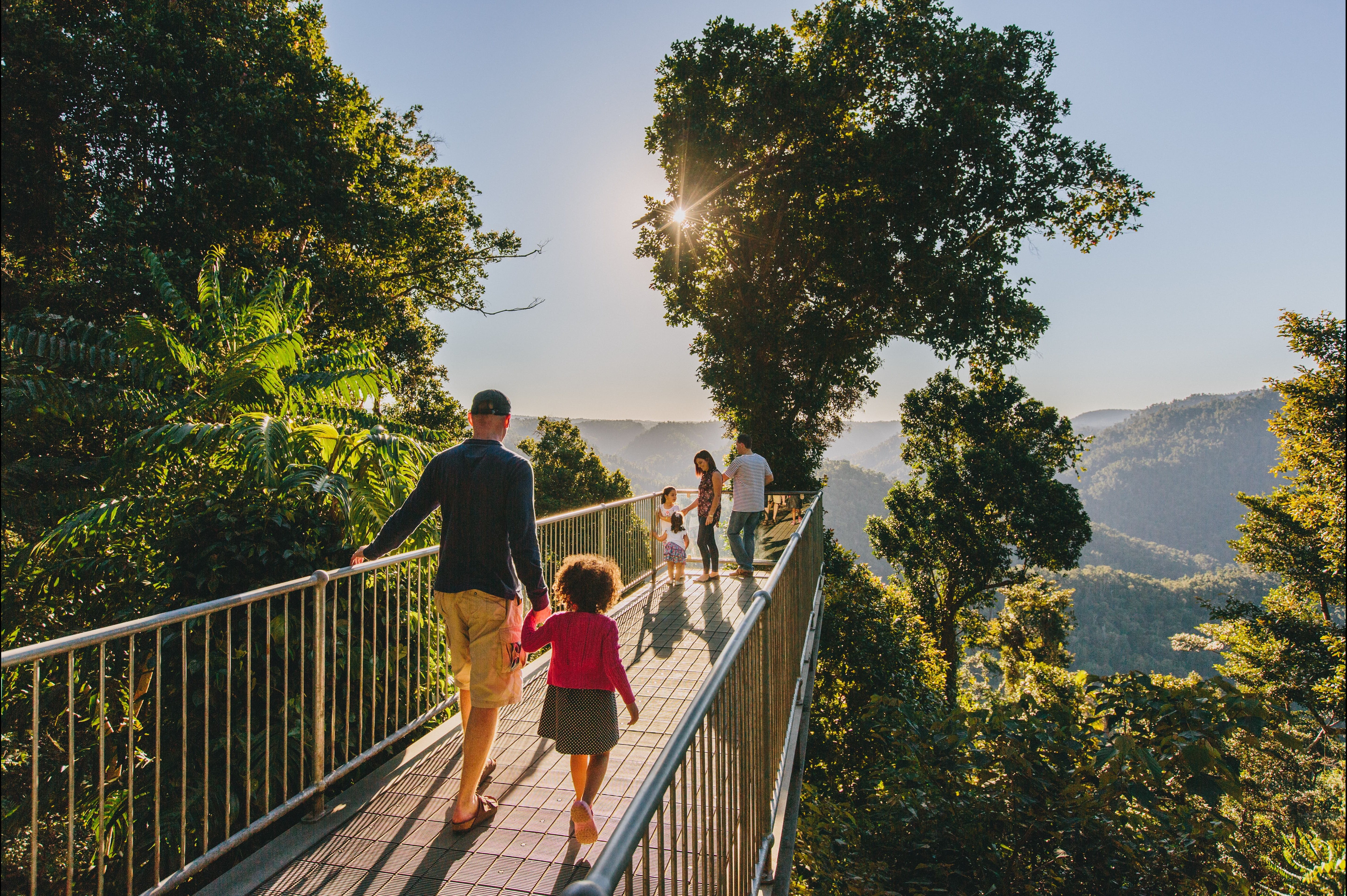 Mamu Tropical Skywalk - Accommodation Coffs Harbour