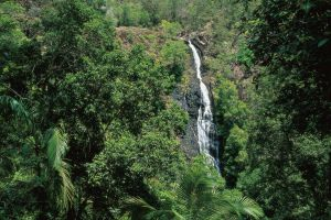 Mapleton Falls National Park - Accommodation Coffs Harbour