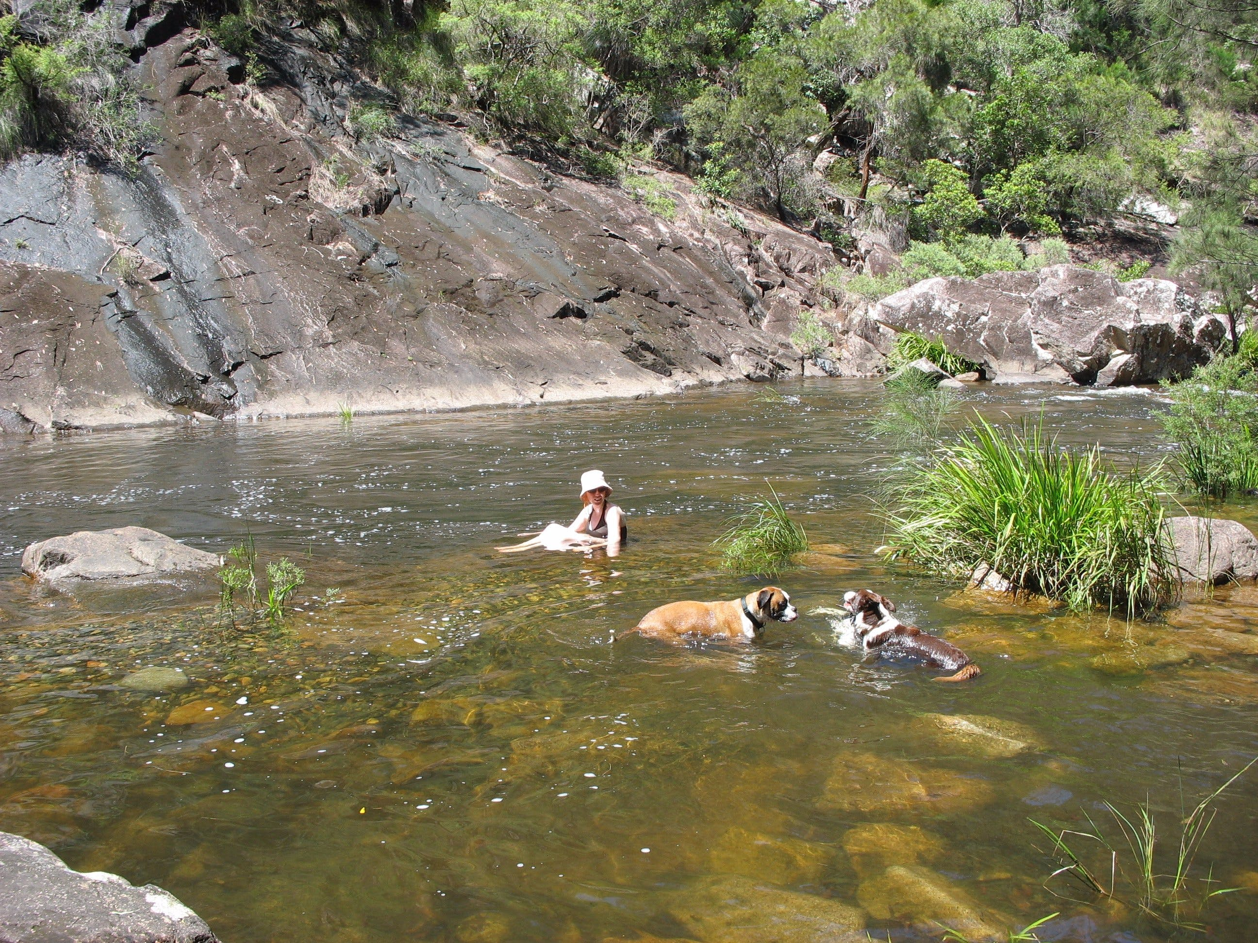 Mount Boss State Forest - Accommodation Coffs Harbour