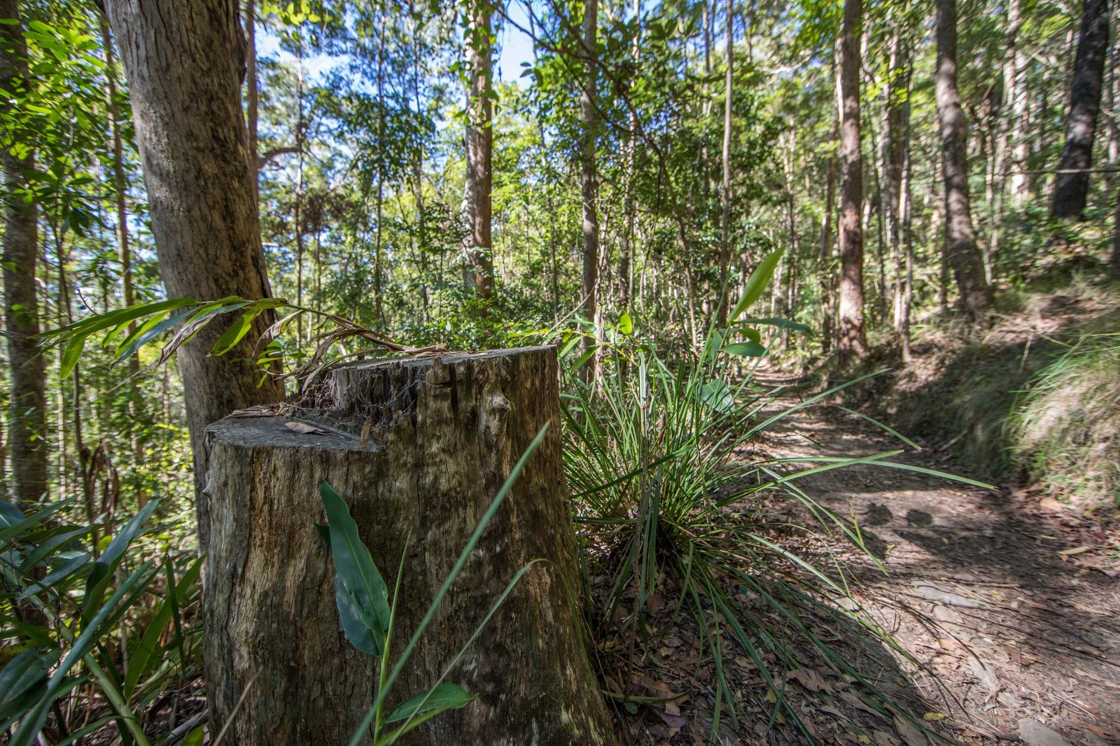 Thylogale Track - Accommodation Coffs Harbour