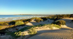 Shelly Beach Dune Walk Trail - Accommodation Coffs Harbour