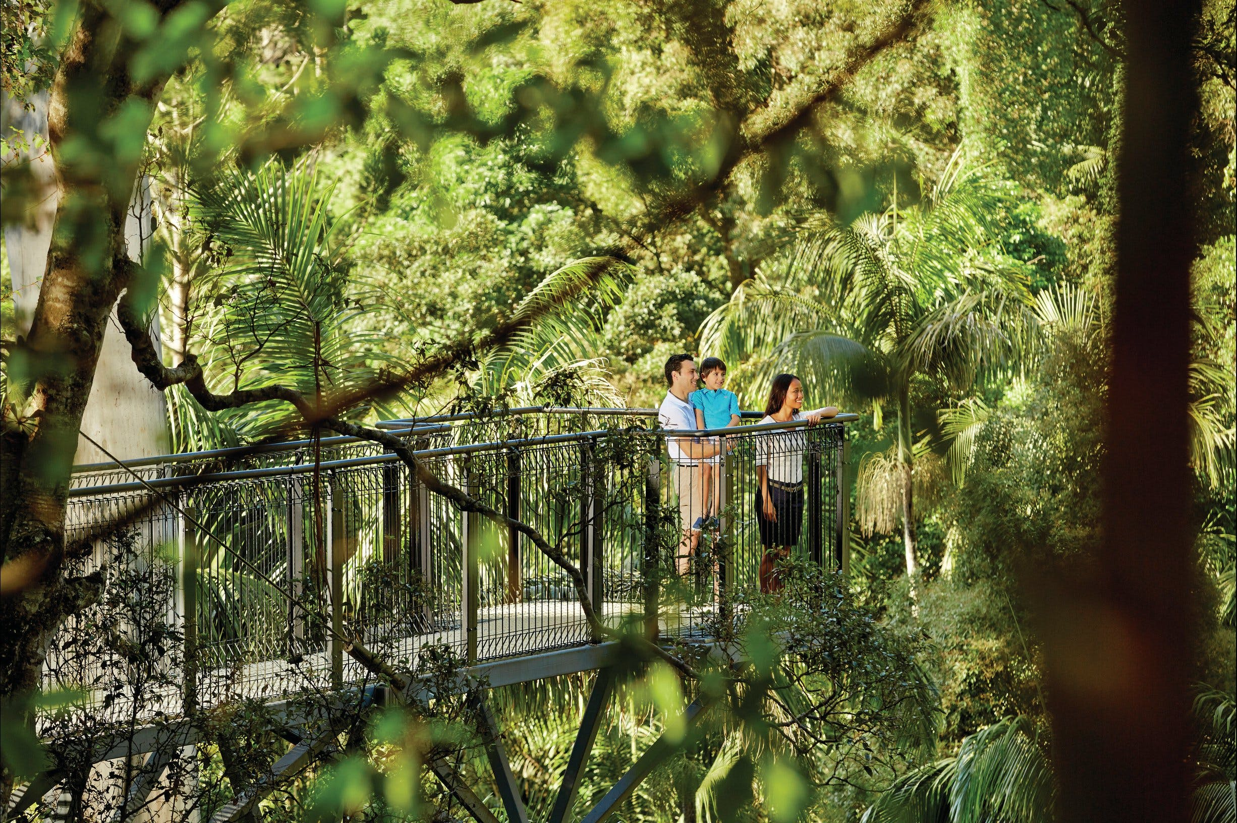 Tamborine Mountain - Accommodation Coffs Harbour
