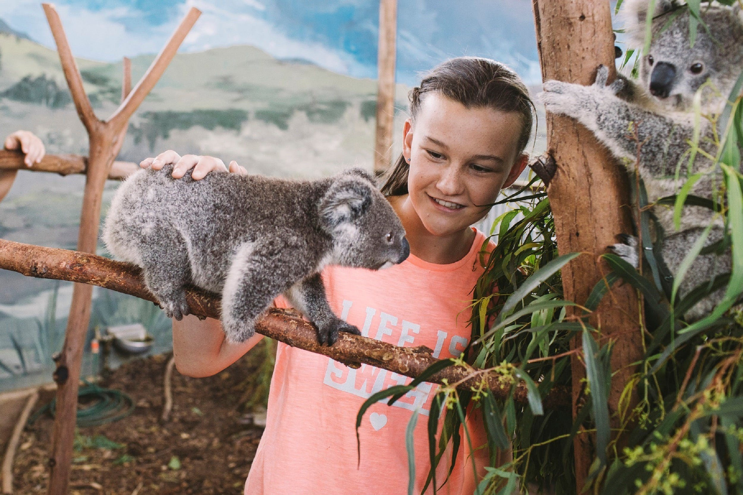Oakvale Wildlife Park - Accommodation Coffs Harbour