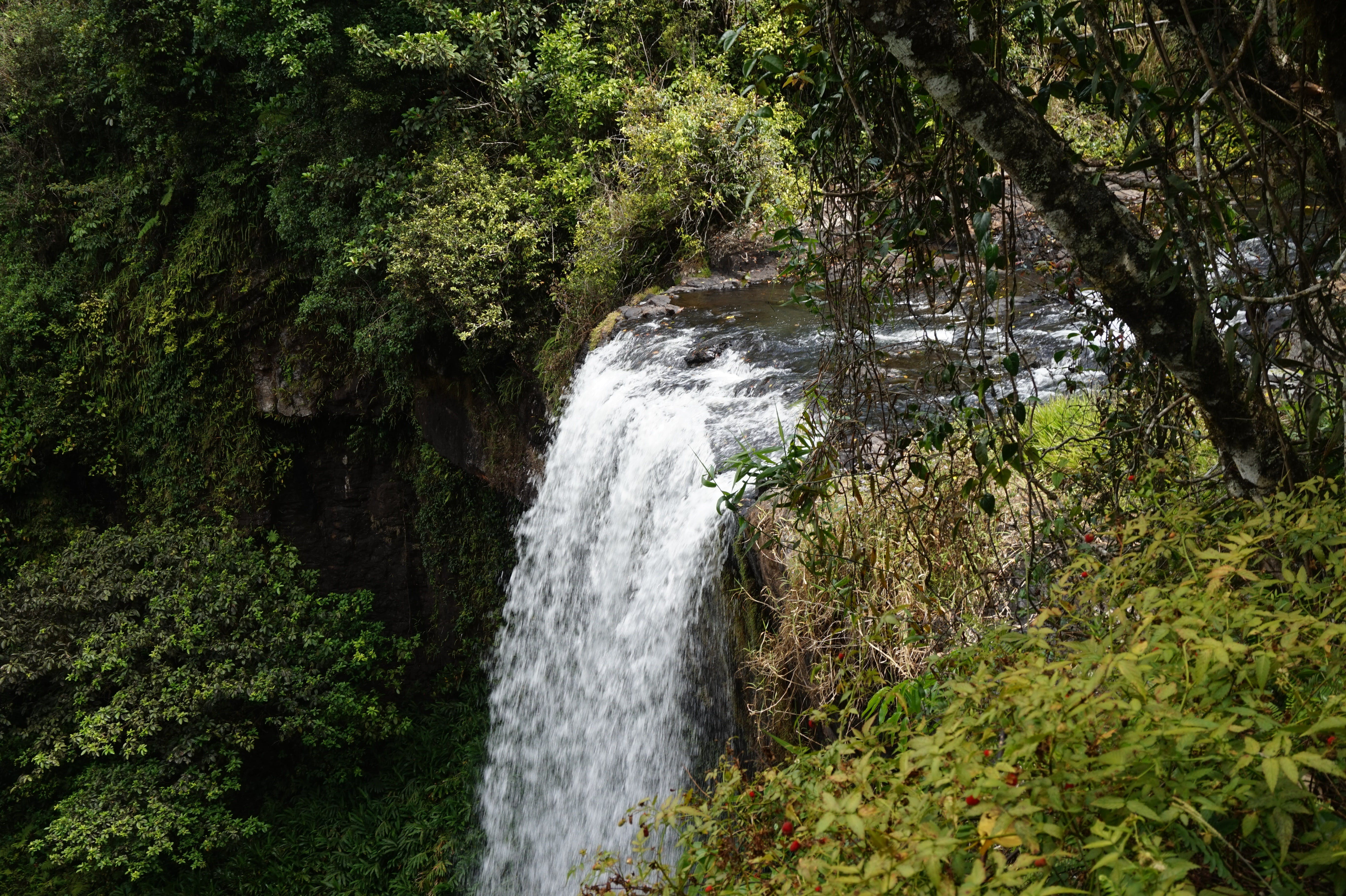 Zillie Falls - Accommodation Coffs Harbour