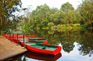 Lane Cove National Park - Accommodation Coffs Harbour