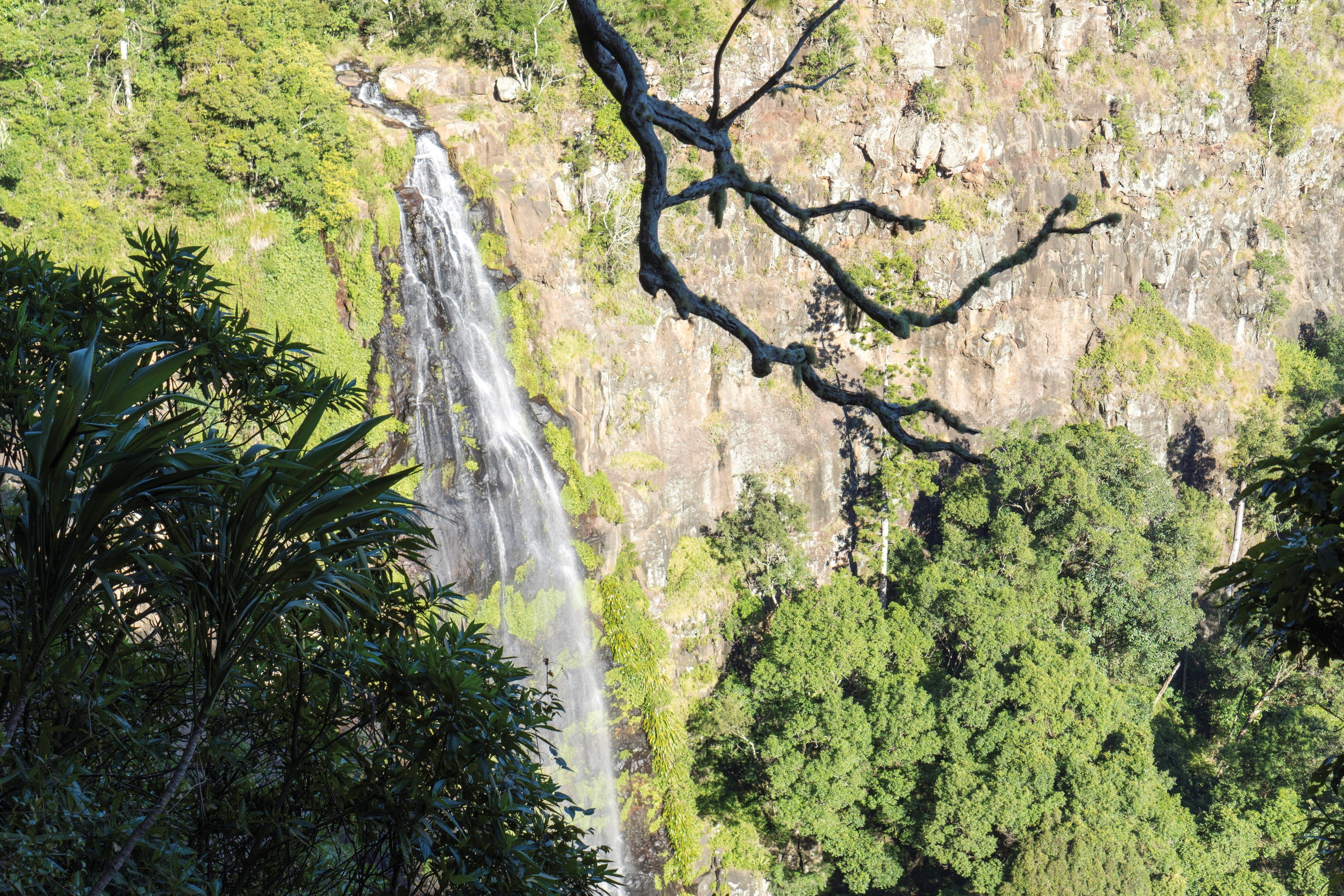 Morans Falls track Lamington National Park - Accommodation Coffs Harbour