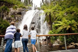 Steavenson Falls - Accommodation Coffs Harbour