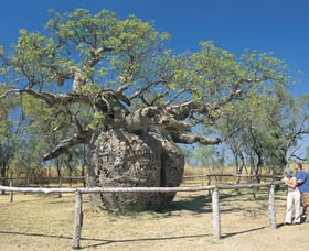 Boab Prison Tree - Accommodation Coffs Harbour