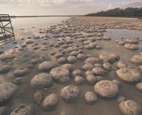 Lake Clifton Thrombolites - Accommodation Coffs Harbour