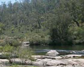 Wellington Discovery Forest - Accommodation Coffs Harbour