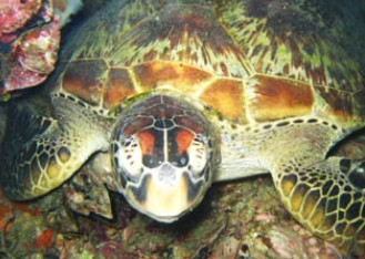 Adrenalin Snorkel and Dive - Accommodation Coffs Harbour