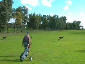 Coffin Bay Golf Club - Accommodation Coffs Harbour