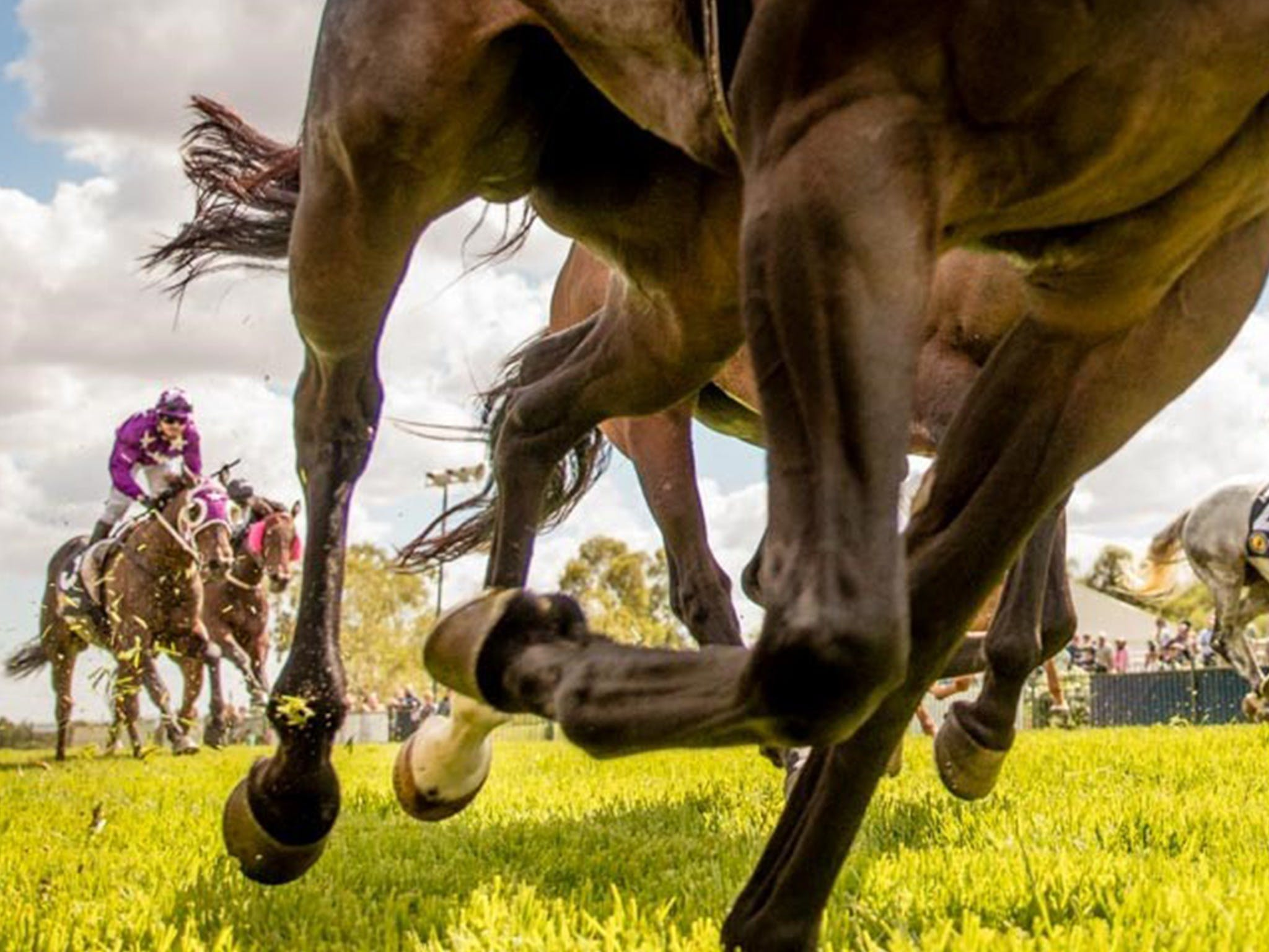 Night Markets and Race Day - Accommodation Coffs Harbour