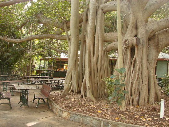 Gardens Tearooms - Accommodation Coffs Harbour